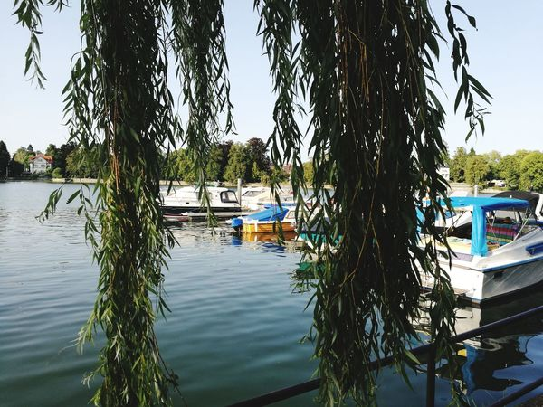 Lindau Water Tree Lake Day Outdoors Nature No People Lindau Bodensee Bodensee Lake Lake Constance, Germany