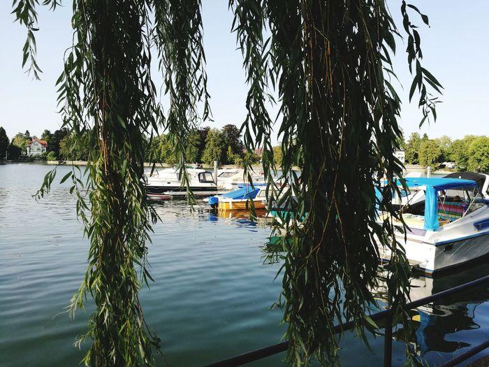 Lindau Water Tree Lake Day Outdoors Nature No People Lindau Bodensee Bodensee Lake Lake Constance, Germany