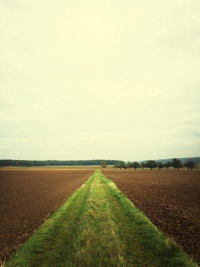 "Green trail! I just ran 5.15 km @ a 6'00""/km pace. Nikeplusrunning Running"