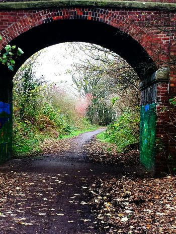 Autumn Collection Colours Of Autumn Autumnleaves Autumn Arch Brick Arch Countryside Walk :) English Countryside