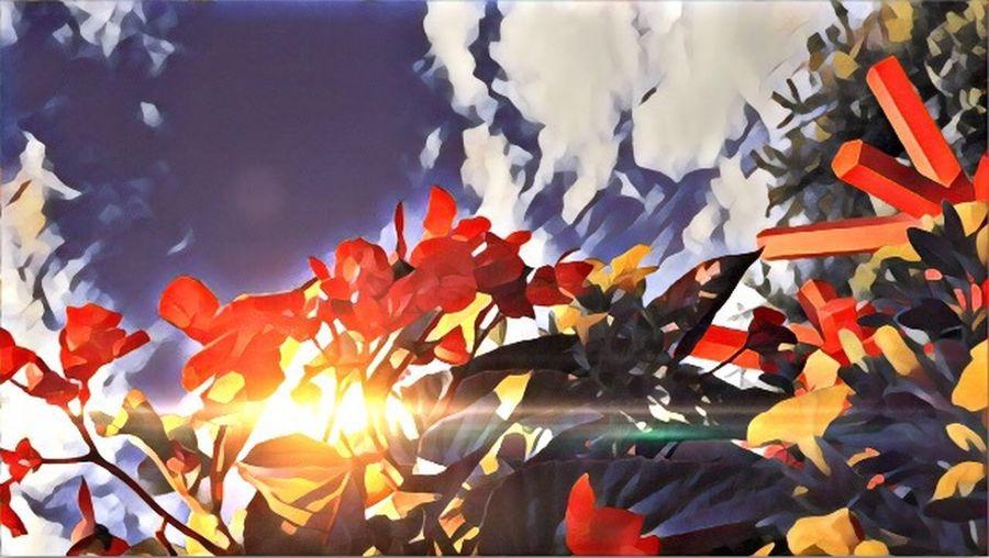 Full frame shot of multi colored flags