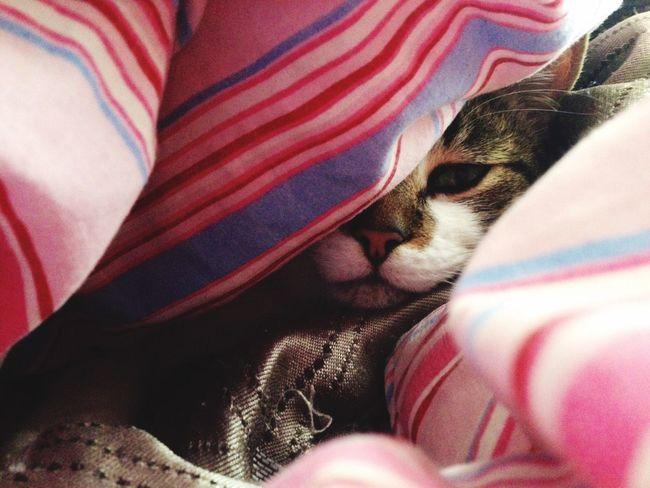 Cat peek a boo Cat Cats Catsofinstagram Cat♡ Cat Lovers Catoftheday Catsagram Cats Of EyeEm Caturday Cat Watching Cat Eyes Kitty Kitty Cat Catlovers Cats 🐱