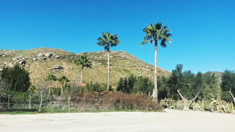 Ruta Del Vino La Cetto Ensenada B.c.