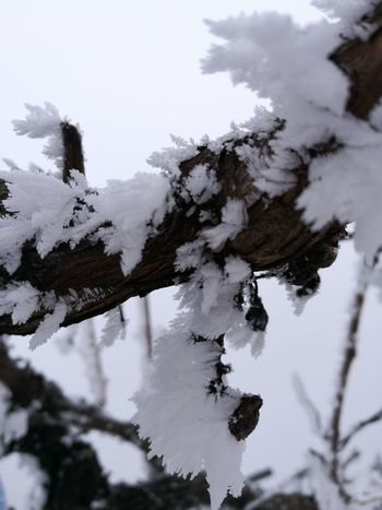 Snow Cold Temperature Winter Close-up No People Beauty In Nature Landscape Nature Vineyard Vineyards In Winter Vinewood Frozen Moments Frozen Photography Allwhite