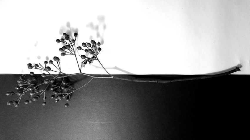 Rose hips Shadowplay Interior Rosehips Autumn🍁🍁🍁 No People Natural Structures Blackandwhite Atmospheric Mood Still Life Botanical Structures In Nature Shadows & Lights Structures EyeEm Best Shots EyeEm Nature Lover EyeEm Best Edits EyeEm Best Shots - Black + White Monochrome Rose Hip Black & White Pure Simplicity Beauty In Nature Close-up Plant