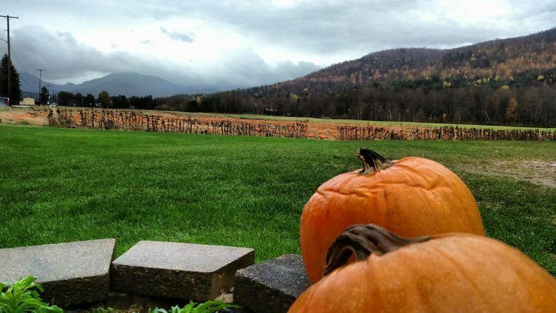 Fall Pumpkin Pumpkinpatch Pumpkins Halloween Farm Vermont Greenery Nature