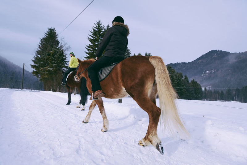 Alps Bavarianforest Horse Horseriding Mountains Nature Snow The Alps It's Cold Outside