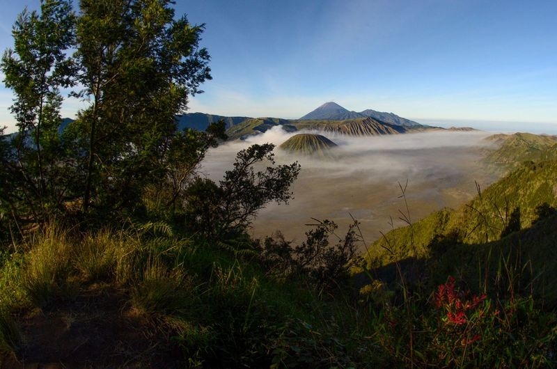 mount bromo, east java, indonesia Sunset Sky And Clouds Amazing View Nature Sunrise Ilovenature Ilovephotography Wallpaper Blue Sky INDONESIA Backpacking Travel Bromo Tengger Semeru National Park Mount Bromo East Java Scenic Landscapes Scenery Tree Mountain Dawn Volcanic Landscape Mountain Peak Volcano Sky Landscape Active Volcano Bromo-tengger-semeru National Park Java Volcanic Crater Lava Volcanic Activity