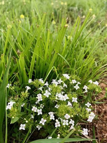 Nature Flower Growth Green Color Grass Plant Field Day Freshness Beauty In Nature No People Outdoors Fragility Close-up Flower Head