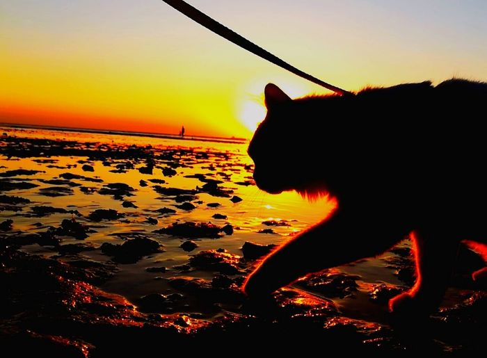 animal themes cat on water Cat walking cat on the sea cat on the beach Cats of EyeEm outdoors cat photography one animal beach water sea sunset Silhouette gold colored day beauty in Nature sky and sea sea and rocks pets mylovelycat❤ Cats 🐱 Nature Light and Darkness Totssy 😍4Nov_20 Domestic Animals Domestic Cat Domestic Animal Themes Cat On Water Cat Walking Cat On The Sea Cat On The Beach Cats Of EyeEm Outdoors Cat Photography One Animal Beach Water Sea Sunset Silhouette Gold Colored Day Beauty In Nature Sky And Sea Sea And Rocks Pets Mylovelycat❤ Cats 🐱 Nature Light And Darkness  Totssy 😍