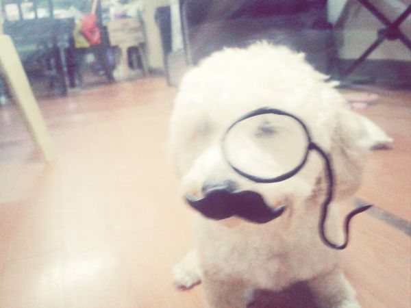 fralala Hey Willow Dog I Love My Dog i mustache you a question, but i will shave it for you later :3