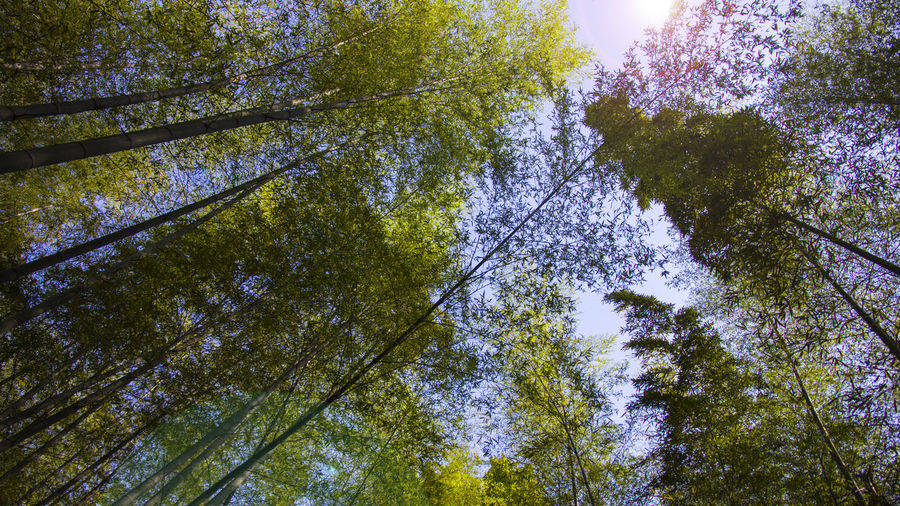 bamboo Canon60d Landscape No People Nature Tree Day Freshness Sunlight Beauty In Nature Multi Colored Lifestyles