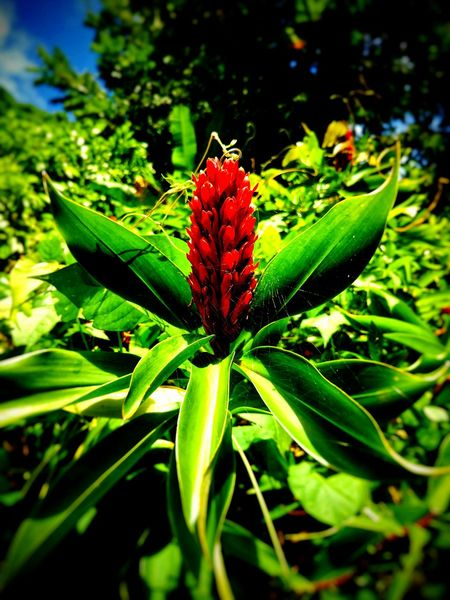 Tobago Flora Leaf Green Color Plant Nature Flower No People Growth Beauty In Nature Freshness Day Flower Head Outdoors Close-up