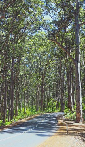 Road among
