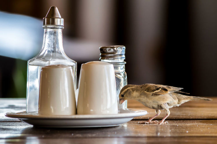 Sparrow bird on a table in a restaurant, picking food from the plate, pepper and salt