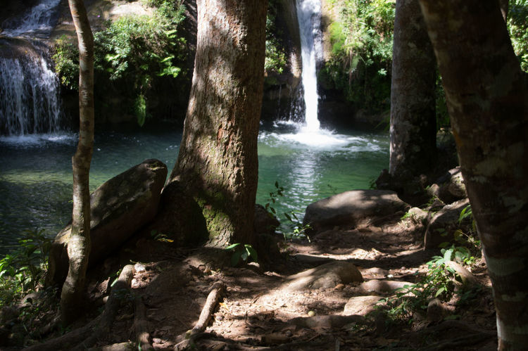 2016 Alturas De Banao Beauty In Nature Cuba Cuba Collection Day Forest Growth Motion Nature No People Outdoors Scenics Tranquility Travelling Photography Tree Tree Trunk Water Waterfall