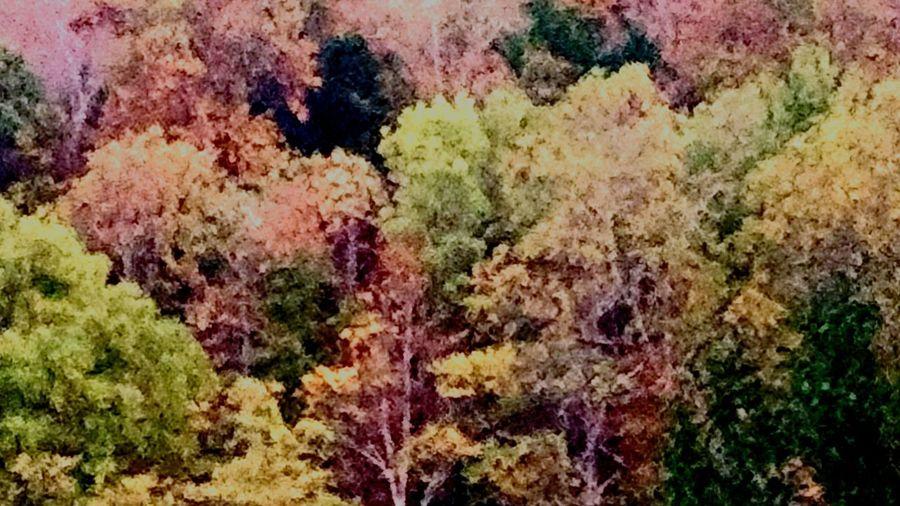 Full frame shot of multi colored leaves