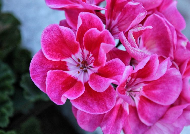 Watercolor Pink