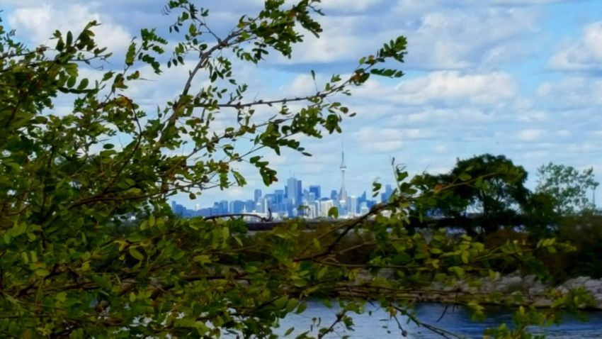 CN Tower - Toronto Toronto Skyline Lake Ontario ACROSS THE LAKE From My Point Of View The View From Here Cloudy Sky Cloud - Sky Lake Tree Nature Sky Water Growth Outdoors Plant Day No People Landscape Beauty In Nature The Week On EyeEm