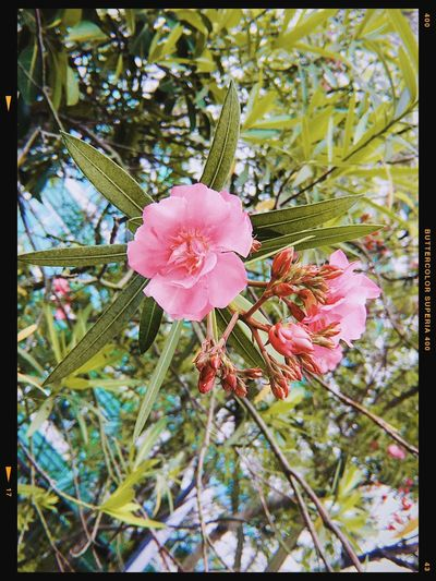 Plant Flowering Plant Growth Beauty In Nature Pink Color Freshness