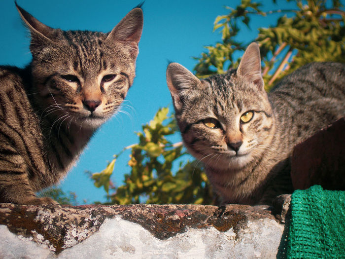 Two cats on wall against the sky