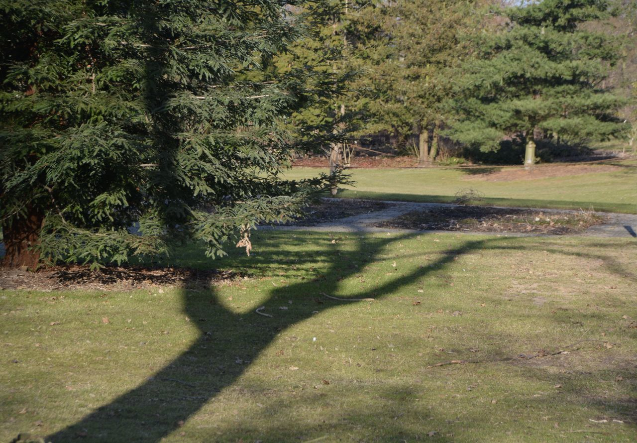 tree, shadow, nature, green color, grass, day, growth, outdoors, sunlight, tranquility, beauty in nature, scenics, no people, landscape, green - golf course, golf course