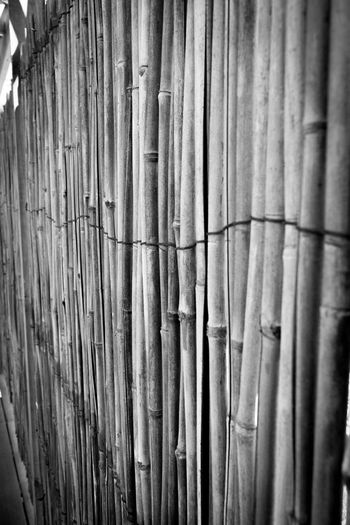 Backgrounds Bamboo Close-up Day Detail Nature No People Outdoors Repetition Side By Side