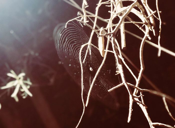 Spider Web Extreme Intersting Night Nightlife Dark Fragility Night Beauty In Nature Selective Focus Nature Animal Wildlife Animal One Animal Close-up No People Beauty In Nature Nature Focus On Foreground Spider Web EyeEmNewHere