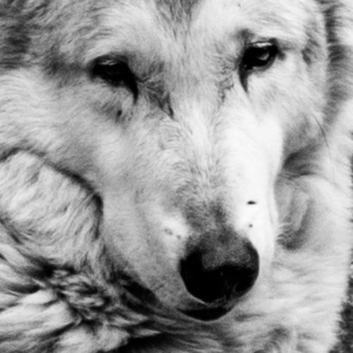 Animal Body Part Animal Head  Animal Nose Animal Themes Close-up Day Dog Domestic Animals Looking At Camera Mammal No People One Animal Outdoors Pets Portrait