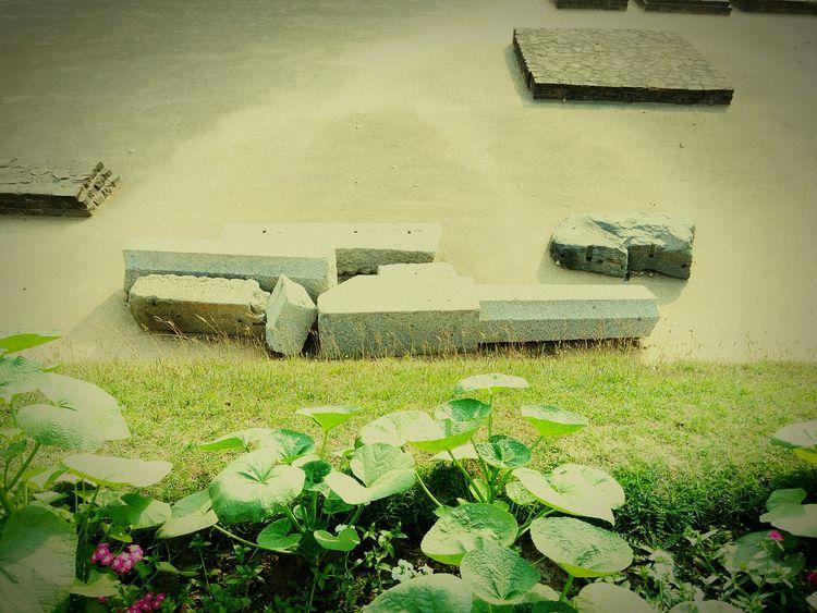 Photographic Memory Ancient Nalanda Memorable Moment After_long_time Enjoying Life Spritual Journey