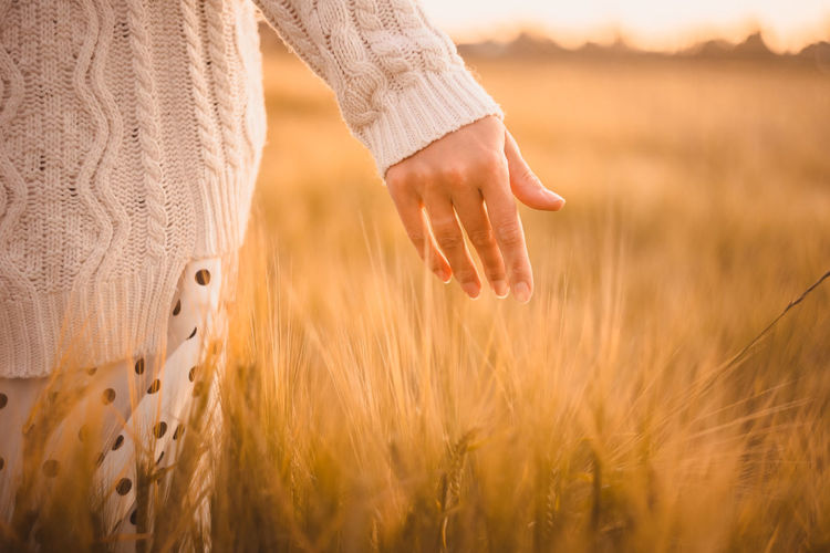 A hand of a girl walking in a wheat field at sunset. rural summer background