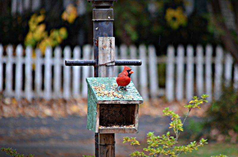 Birdhouse Focus On Foreground Nature No People Red Robin Wood - Material