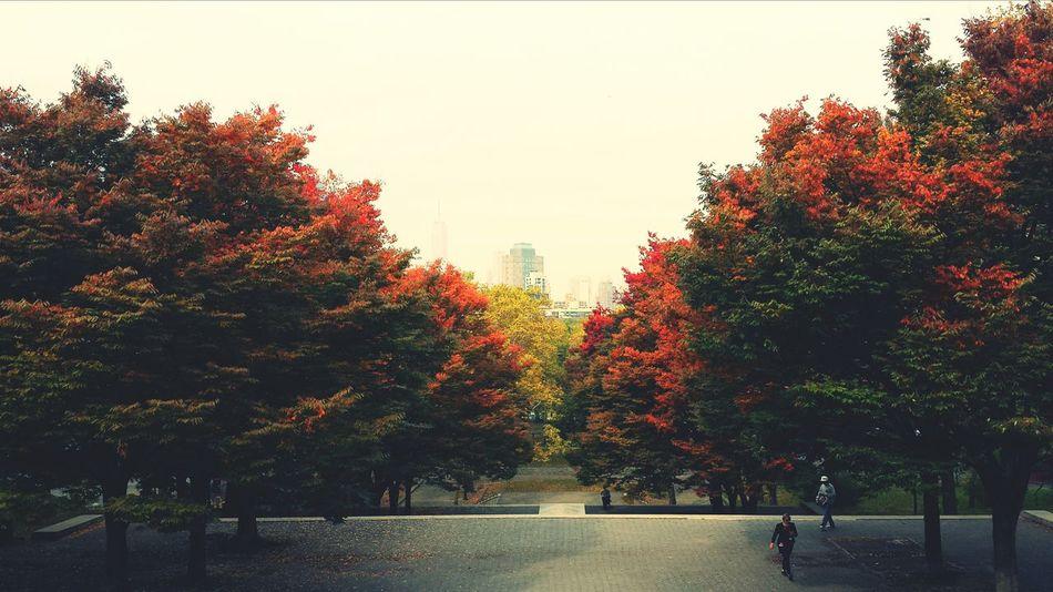 Autumn Leaves Park Stairs Autumn Colors