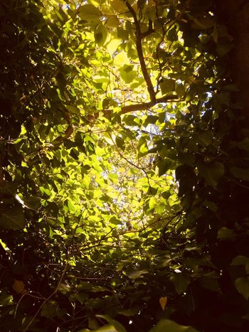 Sun on three Nopeople Plant Tree Nature Water No People Growth Sunlight Beauty In Nature Low Angle View Outdoors Day Branch Tranquility Reflection Green Color Full Frame Tree Canopy  Close-up Plant Part Leaf