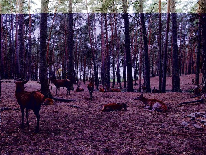When in Brandenburg... Glitch Glitchart Deer Animals In The Wild Forest Brandenburg Tree Cold Temperature Tree Trunk Forest Autumn Mood