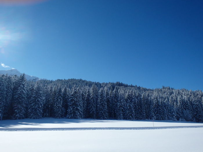 Clear Sky Cold Temperature Landscape Mountain Outdoors Tree White Winter