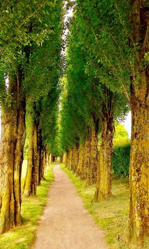 Plant Tree Direction The Way Forward Green Color Growth Nature Road No People Day Beauty In Nature Park Tranquil Scene Tranquility