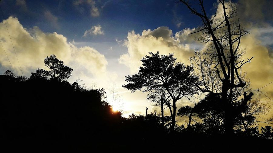 Tree Silhouette Dramatic Sky Sky Nature Sunset Cloud - Sky Beauty In Nature Outdoors No People Low Angle View Tree Trunk Rural Scene Growth Scenics Branch Landscape Tree Area Storm Cloud Day