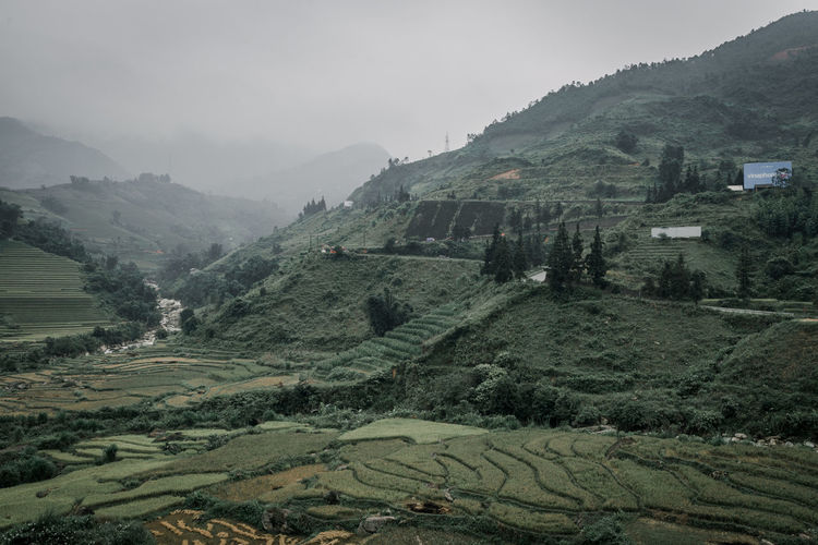 Sapa in winter Mountain Environment Landscape Scenics - Nature Tranquil Scene Beauty In Nature Plant Land Sky Mountain Range No People Agriculture Tree Tranquility Nature Day Green Color Rural Scene Non-urban Scene Outdoors Rolling Landscape Plantation