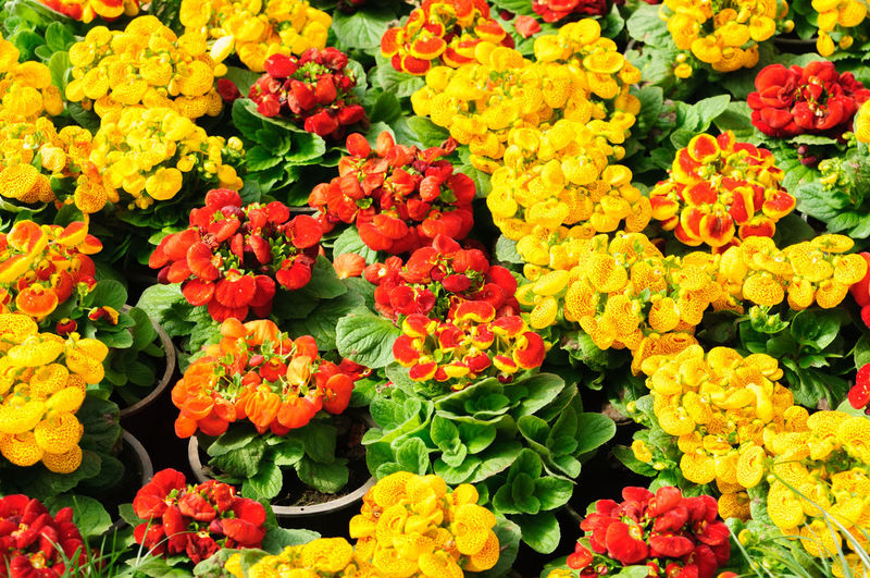 Beauty In Nature Bouquet Bunch Of Flowers Close-up Day Flower Flower Arrangement Flower Head Flower Market Flowering Plant Fragility Freshness High Angle View Inflorescence Marigold Multi Colored Nature No People Outdoors Petal Plant Retail  Variation Vulnerability  Yellow