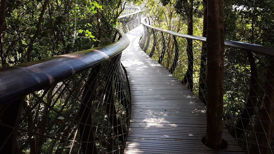 Tree The Way Forward Tranquility Forest Day Nature Green Color Tranquil Scene Beauty In Nature Outdoors Bamboo - Plant Bamboo Grove No People Elevated Walkway Kirstenbosch Botanical Gardens South Africa 🇿🇦 Cape Town, South Africa Cape Town Lovely View From Here