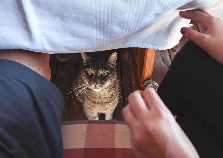 please, sir? Asking Autumn Autumn 2016 Autumn Colors Begging Cat Domestic Animals Domestic Cat Domestic Life Eating Feline Food Guests Hands Legs Lunch Mammal One Animal Pets Sharing  Surprise Table Under The Table Waiting Adapted To The City