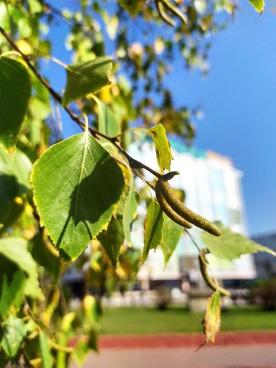 Close-up of leaves on tree against sky