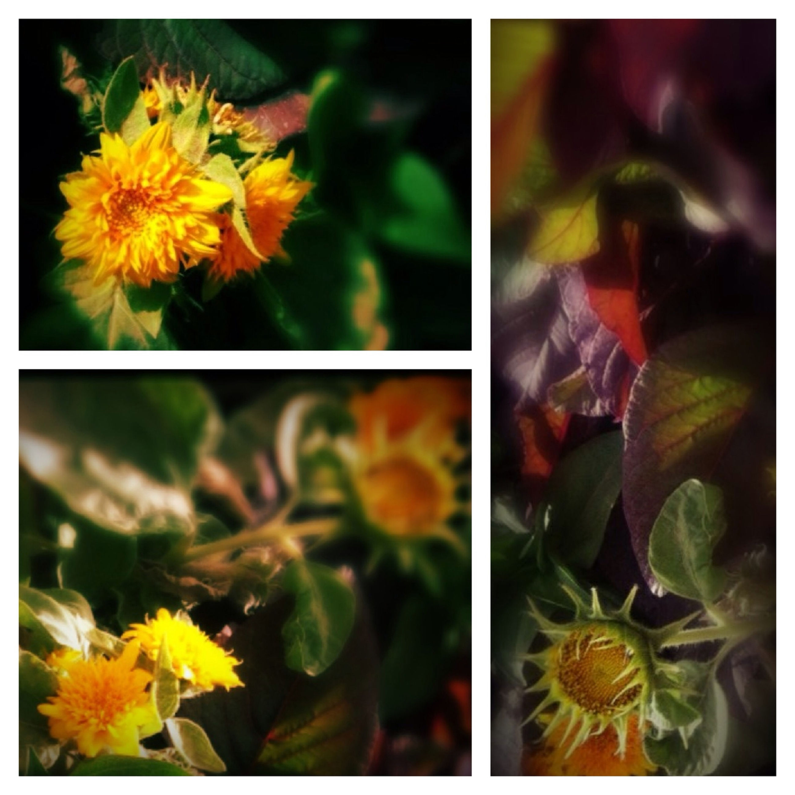 flower, transfer print, petal, yellow, freshness, fragility, flower head, growth, auto post production filter, beauty in nature, close-up, nature, plant, blooming, focus on foreground, in bloom, full frame, day, outdoors, botany