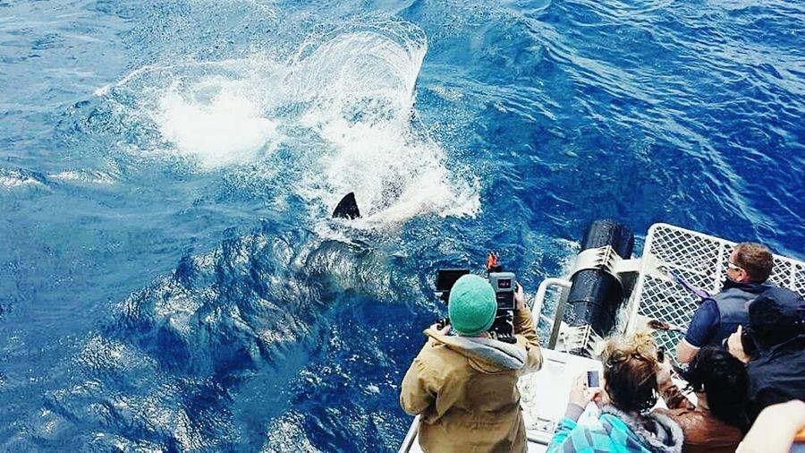 Australia Shark Whiteshark FIN Camera Camera Man Moment Port Lincoln Holiday POV