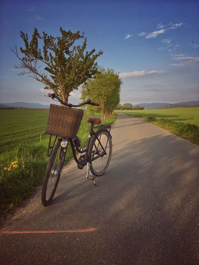 Retro bicycle on a rural road at spring Tree Transportation Sky Growth Field Tranquil Scene Landscape Road Tranquility Nature No People Scenics Beauty In Nature Day Outdoors Grass Bike Bikes Bicycle Bicycles Cycling Retro Retro Styled Countryside Nature
