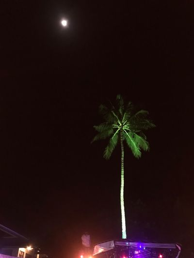 Night Illuminated Tree Plant Nature Sky Celebration Tree Trunk Outdoors Holiday Event Decoration Copy Space Architecture No People Moon Lighting Equipment Growth Christmas Glowing