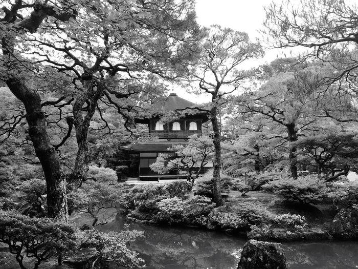 Nature Landscape Architecture Blackandwhite Temple Japanese Garden My Best Photo 2015