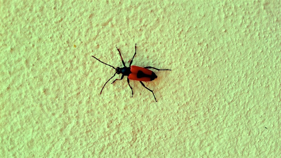 Insect on a green wall Animal Themes Animal Wildlife Animals In The Wild Close-up Day Full Length Green Color Insect Mosquito Nature No People One Animal Outdoors Wildlife