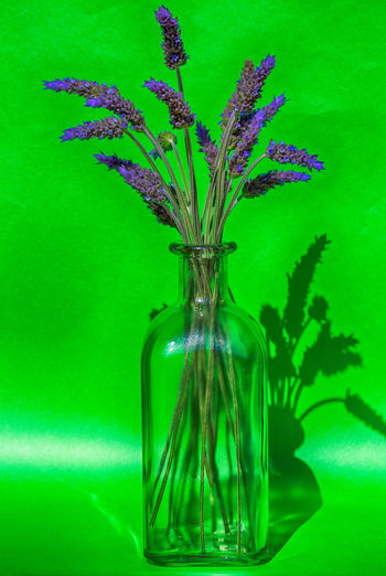 Close-up of lavender in vase on table